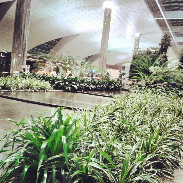 G Force Health Club Dubai Airport Terminal 3