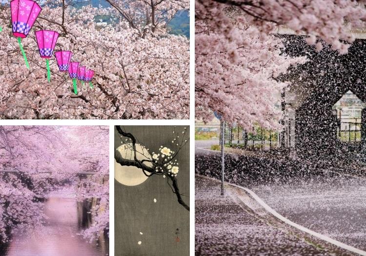 Sakura_hanami_10
