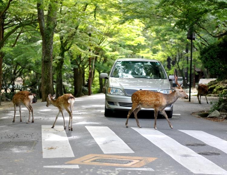 Nara_022