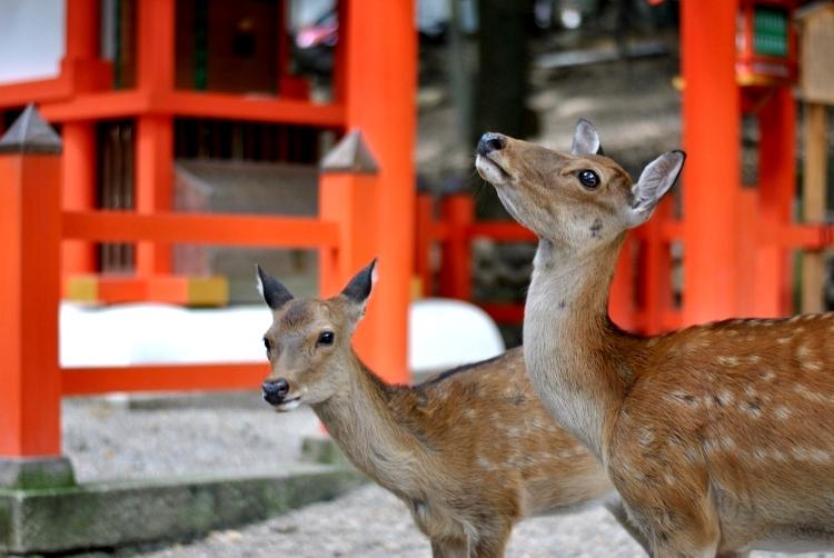 Nara_04