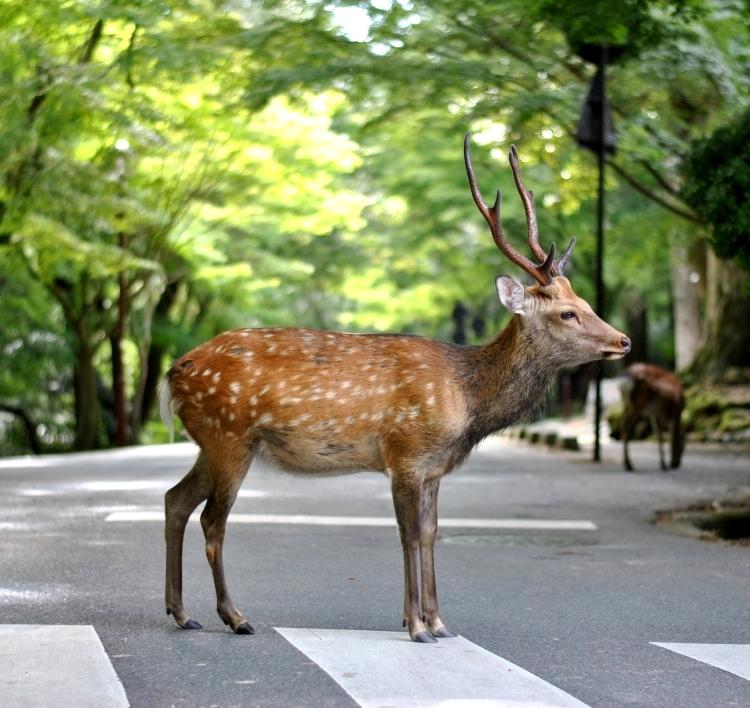 Nara_07