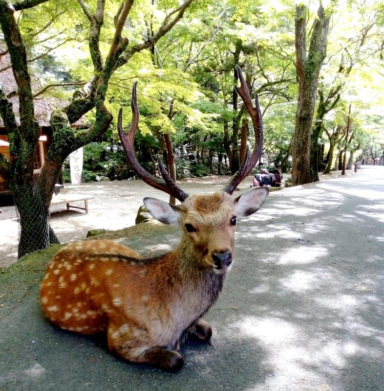 Nara_12