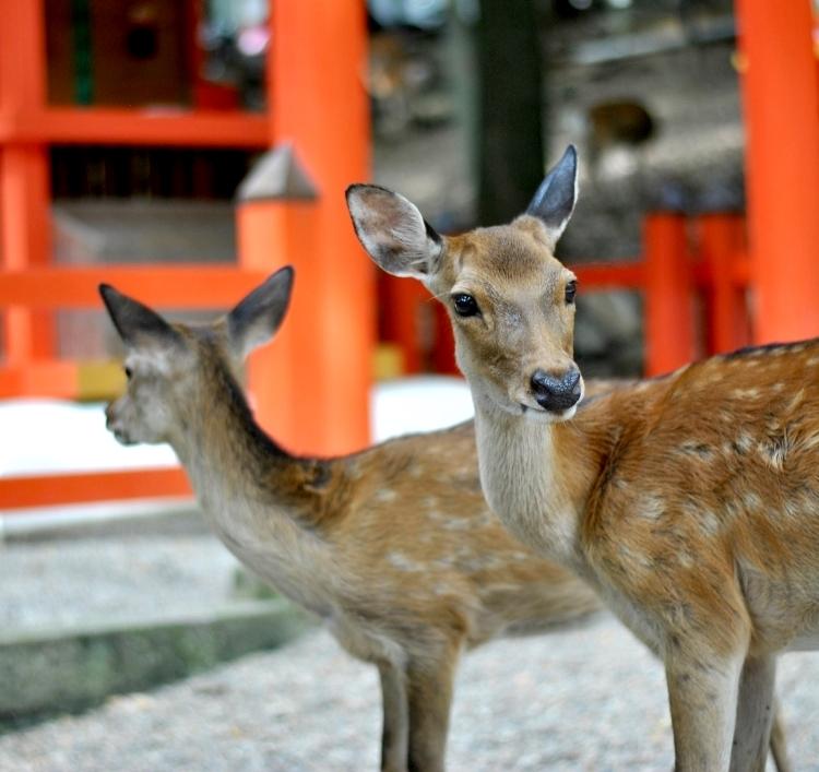 Nara_13