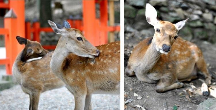 Nara_20
