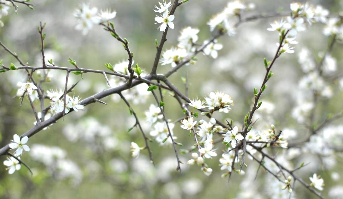 hello_spring_12