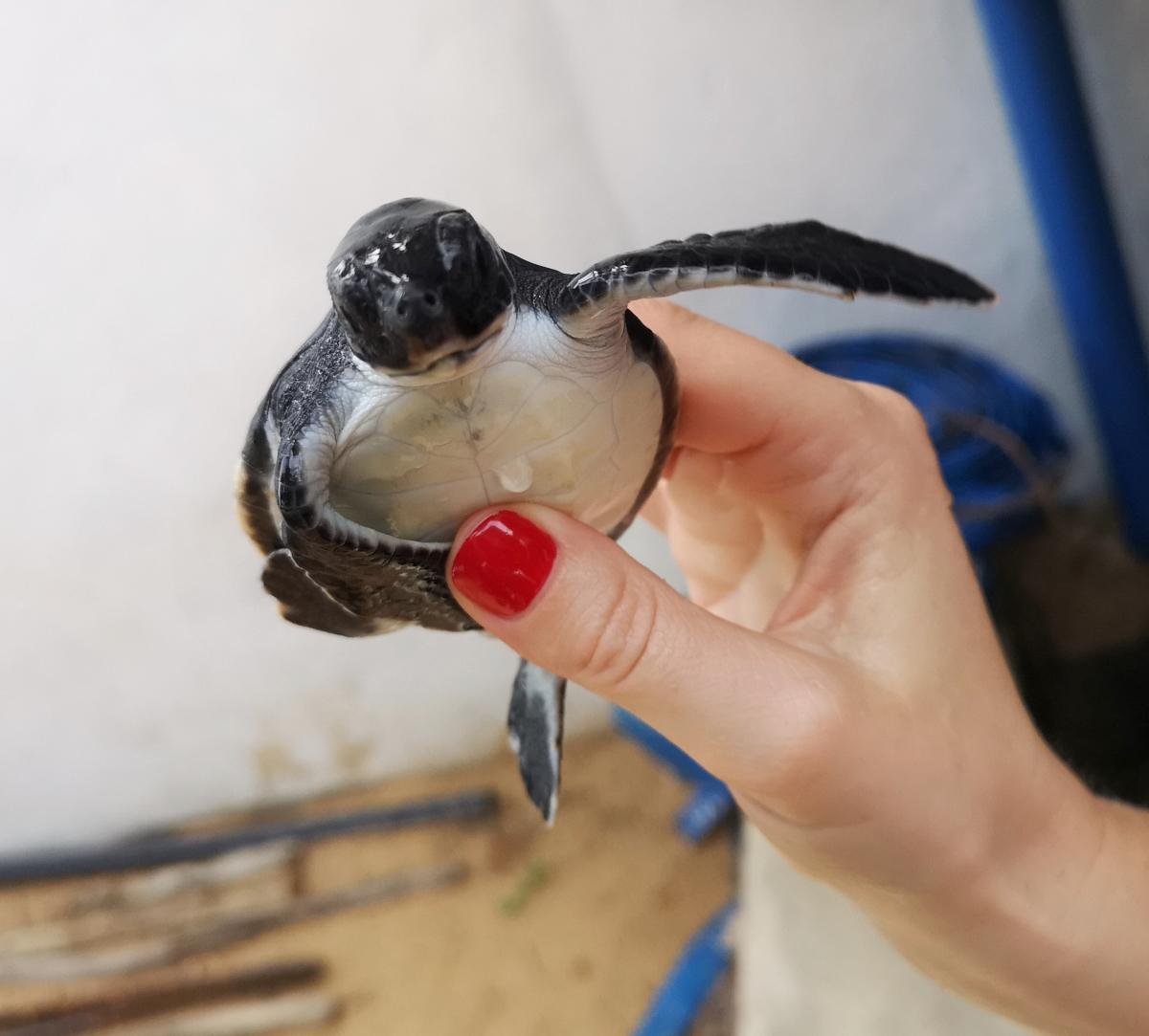 sea turtle hatchery 01